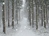 Winter Landscape, Near Villingen-Schwenningen, Black Forest, Baden-Wurttemberg, Germany, Europe Fotografisk tryk af Jochen Schlenker
