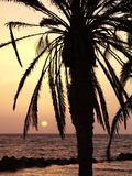 Sunrise Near Sidi Slim, Island of Jerba, Tunisia, North Africa, Africa Photographic Print by Hans-Peter Merten