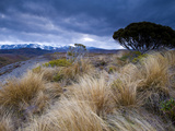 Tongariro National Park, UNESCO World Heritage Site, North Island, New Zealand, Pacific Photographic Print by Ben Pipe