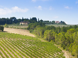 Vineyard, Strada in Chianti, Chianti Area, Firenze Province, Tuscany, Italy, Europe Photographic Print by Nico Tondini