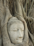 Buddha Head, Wat Mahathat, Ayutthaya, UNESCO World Heritage Site, Thailand, Southeast Asia, Asia Reprodukcja zdjęcia autor Richard Maschmeyer