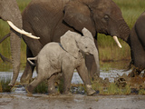 Baby African Elephant (Loxodonta Africana), Serengeti National Park, Tanzania, East Africa, Africa Photographic Print by James Hager