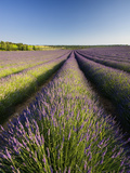 Lavender Fields, Provence, France, Europe Photographic Print by Ben Pipe