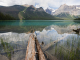 Fallen Tree Trunks, Emerald Lake, Yoho National Park, UNESCO World Heritage Site, British Columbia, Photographic Print by Martin Child