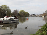 Boats and Canada Geese on the River Thames, Crossed by Richmond Bridge, Richmond, London, England,  Photographic Print by Stuart Forster