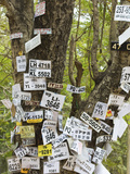 Vehicle Numbers of Pilgrims Pinned to a Tree in This Sacred Town, Popular with All Religions, Katar Photographic Print by Robert Francis