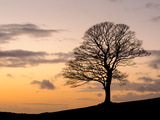 Bare Winter Tree at Sunset, the Roaches, Staffordshire, Peak District National Park, England, Unite Photographic Print by Chris Hepburn