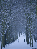 Hampstead Heath in Winter, London, England, United Kingdom, Europe Photographic Print by Ben Pipe