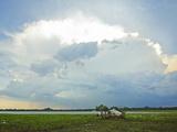 Backlit Storm Cloud over a Lagoon (Tank) at Kumana National Park, Formerly Yala East, Kumana, Easte Photographic Print by Robert Francis