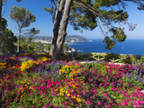 Jardins Botanico De Cap Roig, Calella De Palafrugell, Costa Brava, Catalonia, Spain, Mediterranean, Fotografisk tryk af Stuart Black