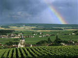Champagne Vineyards and Rainbow, Ville-Dommange, Near Reims, Champagne, France, Europe Photographic Print by Stuart Black
