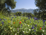 Spring Flowers, White Mountains (Lefka Ori), Chania Region, Crete, Greek Islands, Greece, Europe Photographic Print by Stuart Black