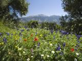 Spring Flowers, White Mountains (Lefka Ori), Chania Region, Crete, Greek Islands, Greece, Europe Photographic Print by Stuart Black