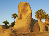 Sphinx Path, Temple of Luxor, Thebes, UNESCO World Heritage Site, Egypt, North Africa, Africa Photographie par  Tuul