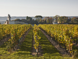 Vineyards Near to the Chateau of Chinon, Indre-Et-Loire, Loire Valley, France, Europe Photographic Print by Julian Elliott
