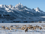 Elk (Cervus Canadensis) with Antlers, Snow-Covered Teton Mountains in the Background, Elk Wildlife  Photographic Print by Kimberly Walker