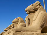 Sphinx Path, Temple of Amun, Karnak, Thebes, UNESCO World Heritage Site, Egypt, North Africa, Afric Photographic Print by  Tuul