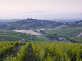 The Vineyards of Sancerre before Sunrise, Cher, Loire Valley, Centre, France, Europe Photographic Print by Julian Elliott