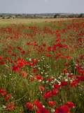 Poppy Field Near Mansfield, Nottinghamshire, England, United Kingdom, Europe Photographic Print by Frank Fell