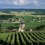 Champagne Vineyards, Ville-Dommange, Near Reims, Champagne, France, Europe Photographic Print by Stuart Black