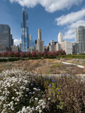 Lurie Garden with Skyline, Chicago Millennium Park, Chicago, Illinois, Usa Photographic Print by Alan Klehr