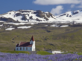 Scenic Landscape of Lupin and Church Against Snowcapped Mountains, Snaefellsnes Peninsula, Iceland Photographic Print by Joan Loeken