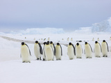 Emperor Penguins (Aptenodytes Forsteri) on Ice, Snow Hill Island, Antarctica Photographic Print by Keren Su