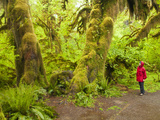 Woman Hiking, Hall of Moss in the Hoh Rainforest, Olympic National Park, Washington, Usa Photographic Print by Michele Westmorland