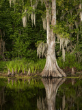 Cypress Reflected in Bayou Along Highway 61 on Stormy Summer Afternoon, New Orleans, Louisiana, Usa Photographic Print by Paul Souders