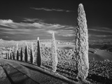 Infra Red Black and White View of Drive Lined with Cypress Trees, San Quirico D'Orcia, Tuscany, Ita Photographic Print by Adam Jones