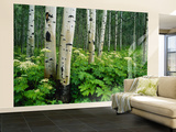 Cow Parsnip Growing in Aspen Grove, White River National Forest, Colorado, Usa Wall Mural – Large by Adam Jones