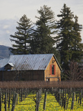 Vineyard in Winter, Rutherford, Napa Valley Wine Country, Northern California, Usa Photographic Print by Walter Bibikow