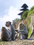 Monkeys Run Free Through the Uluwatu Temple, Indonesia, as Is Common in Indonesian Temples, Bali Photographic Print by Micah Wright