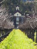 Vineyard in Winter, Rubicon Estate Vineyard, Rutherford, Napa Valley Wine Country, California, Usa Photographic Print by Walter Bibikow