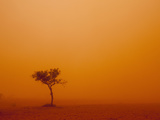 Dust Storm Turns Sky Orange with Blown Sand and Windswept Tree, Ivanhoe, New South Wales, Australia Photographic Print by Paul Souders