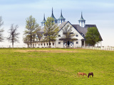 Thoroughbred Horses Grazing, Manchester Horse Farm, Lexington, Kentucky, Usa Photographic Print by Adam Jones