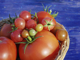 Heirloom and Hybrid Tomatoes in Year-Round Greenhouse, Hills of Central Serbia Photographic Print by Russell Gordon