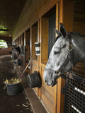 Thoroughbred Horse in Stall, Donamire Horse Farm, Lexington, Kentucky, Usa Photographic Print by Adam Jones