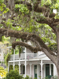Historic Home with Spanish Moss-Covered Oak Tree, Fernandina Beach, Amelia Island, Florida, Usa Fotografisk tryk af Cindy Miller Hopkins