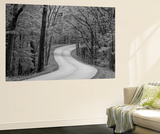 Curvy Roadway under Spring Green Canopy at Brown County State Park in Indiana, Usa Wall Mural by Chuck Haney