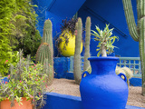 Jardin Majorelle, Marrakech, Morocco Fotografisk tryk af Nico Tondini