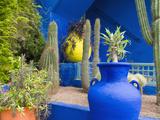 Jardin Majorelle, Marrakech, Morocco Fotografisk tryk af Nico Tondini