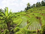 Rice Paddies in Central Bali, Indonesia Photographic Print by Micah Wright
