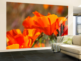 Poppies, Antelope Valley Near Lancaster, California, Usa Wall Mural – Large by Jamie & Judy Wild