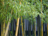 Bamboo in Traditional Chinese Garden, Suzhou Museum, Suzhou, Jiangsu, China Photographic Print by Keren Su