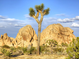 Granite Rock Formation and Joshua Tree, Joshua Tree National Park, California, Usa Photographic Print by Jamie & Judy Wild
