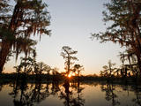 Caddo Lake at Sunrise, Marion Co., Texas, Usa Photographic Print by Larry Ditto