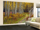 Footpath Through Autumn Aspen Trees, San Isabel National Forest, Colorado, Usa Fototapete – groß von Adam Jones