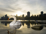 Mute Swan, Lost Lagoon, Stanley Park, British Columbia, Canada Photographic Print by Paul Colangelo