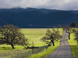 Trees and Country Road, Santa Barbara Wine Country, Santa Ynez, Southern California, Usa Photographic Print by Walter Bibikow